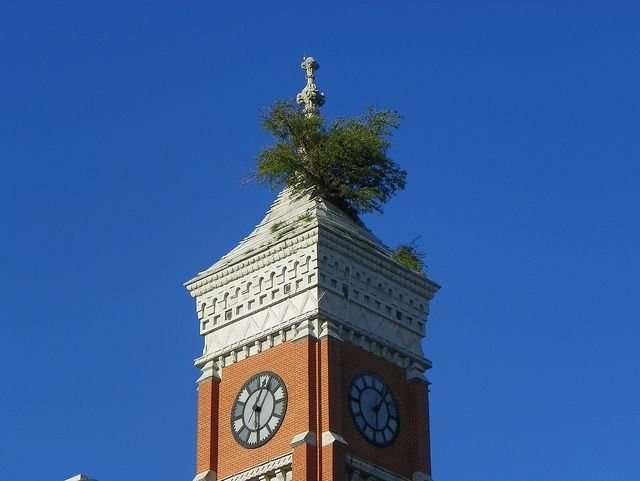 Дерево Гринсбурга, растущее из крыши башни здания суда (5 фото)