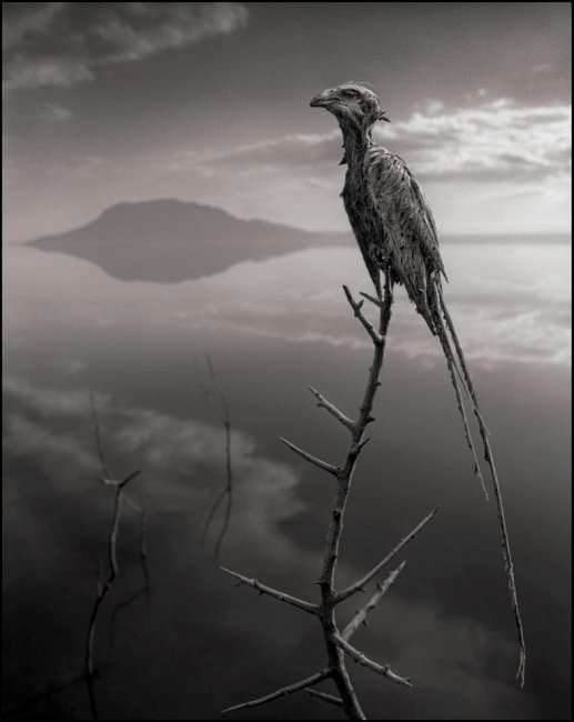 Озеро Натрон превращает животных в каменные статуи (6 фото)