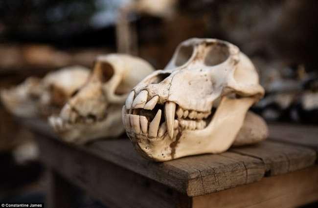 Самая крупная аптека по продаже ритуальных вещей вуду (23 фото)