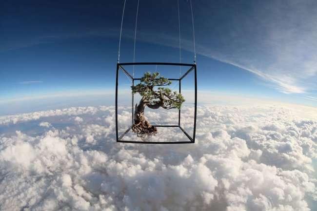 Невероятный полет растений в космос (6 фото)