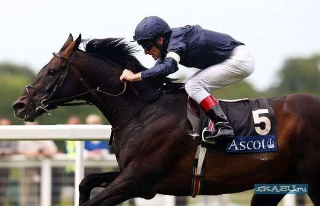 У лошади королевы Британии обнаружили допинг (3 фото)