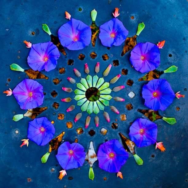 Цветочные мандалы от Кэти Кляйн (15 фото)
