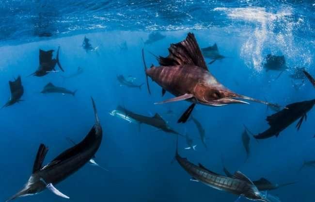 Погружение в океан к тигровым акулам (21 фото)