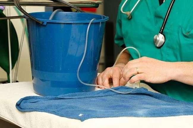 Золотой рыбке сделана операция по удалению опухоли (5 фото)