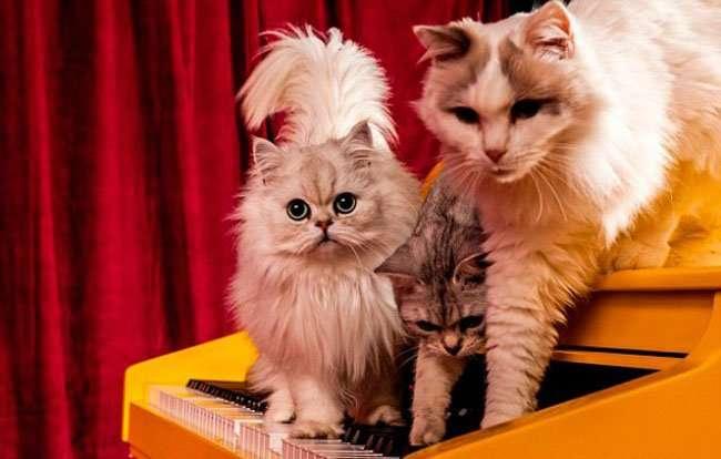 Рояль для кошек (3 фото)