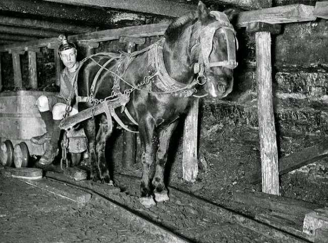 Гигантская фигура лошади в Великобритании (7 фото)