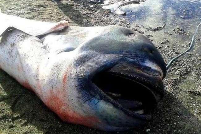 Очень редкий вид акул (4 фото)