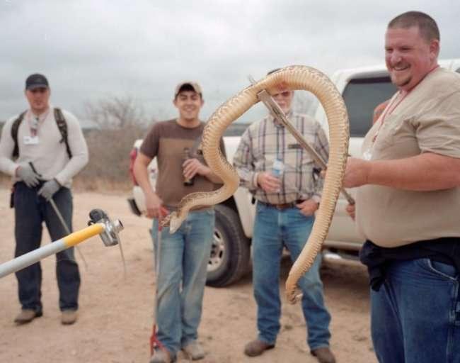 Фестиваль гремучих змей (11 фото)