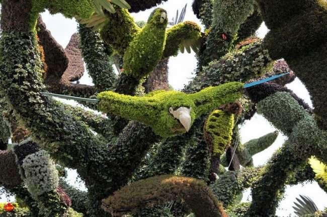 Фигуры из цветов - топиари (18 фото)