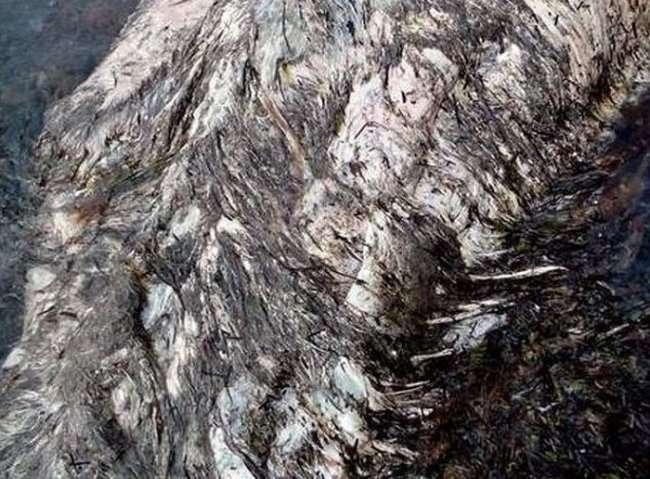 На побережье Шахтерска обнаружены останки неизвестного животного (5 фото)