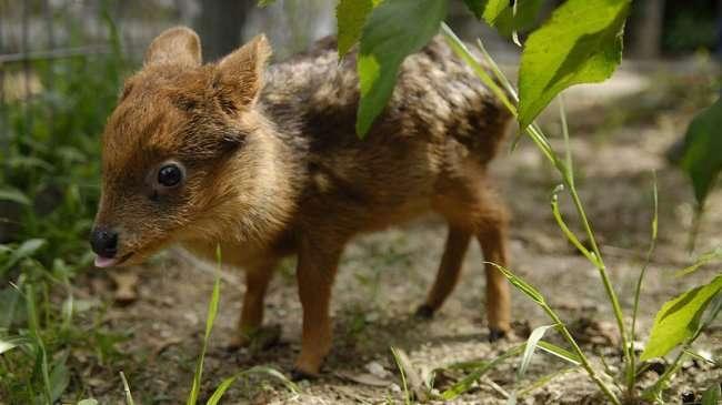 Самые маленькие животные в своём виде (10 фото)