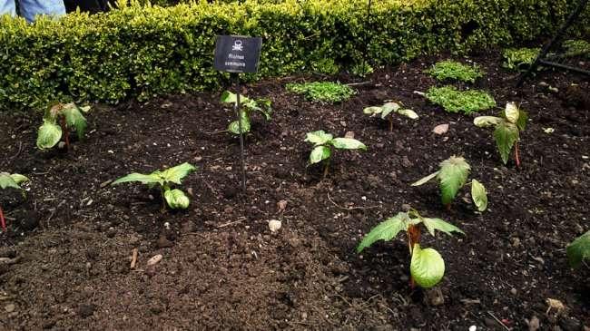 Ядовитый сад Альнвика (7 фото)