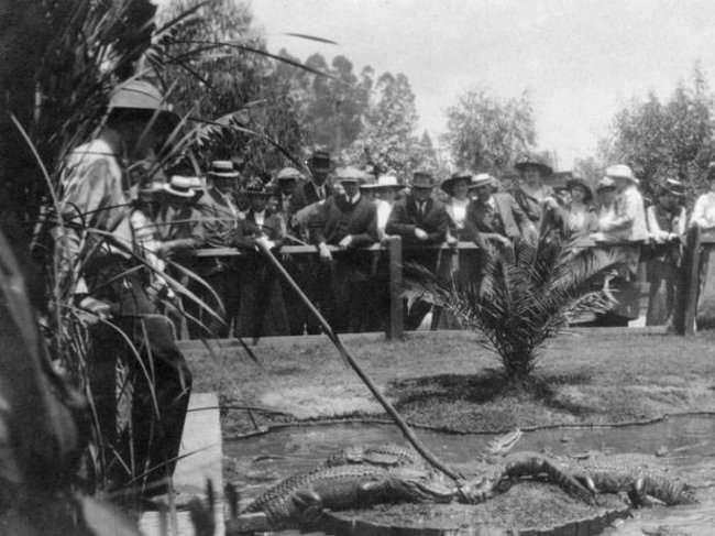 Ферма по разведению аллигаторов (16 фото)