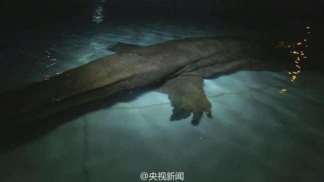 Найдена крайне редкая саламандра (4 фото)
