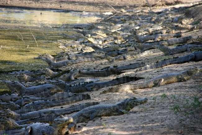 Самое крупное болото на планете (4 фото)
