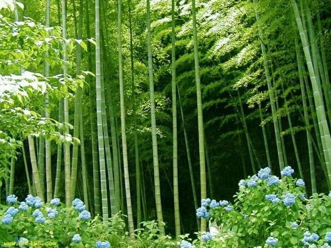 Интересные факты о семенах растений (7 фото)