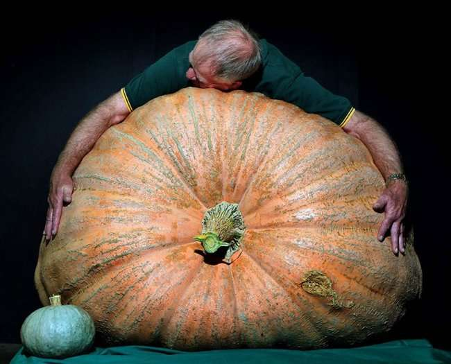 Овощи гиганты-рекордсмены (19 фото)