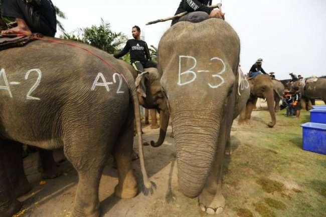 Поло на слонах в Бангкоке (16 фото)