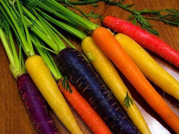 Разнообразие морковки (5 фото)