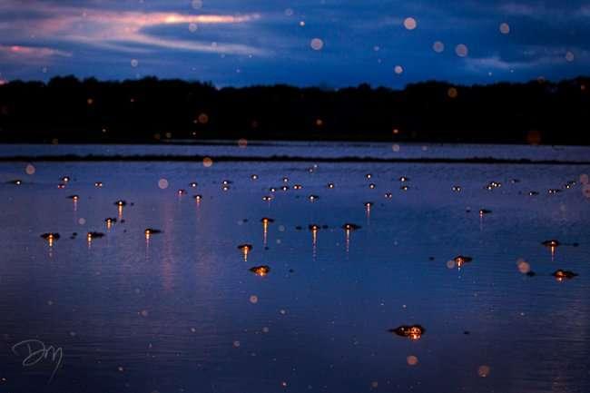 Фото, сделанные на болоте после заката солнца (6 фото)