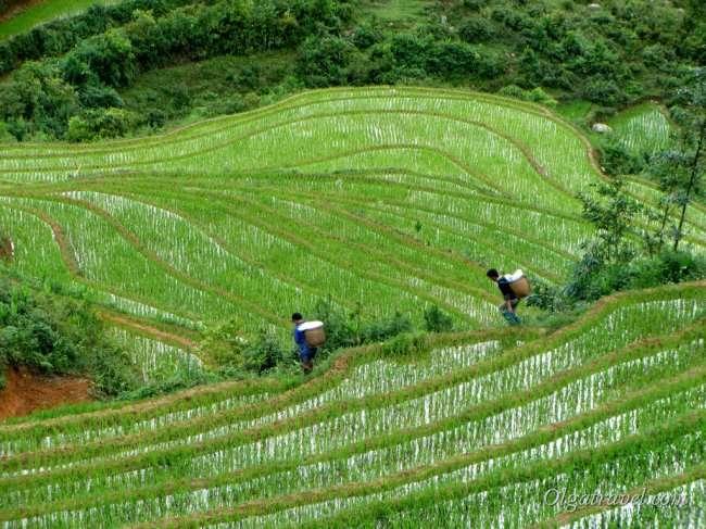 Туры во Вьетнам - путешествие в мир фей и драконов!